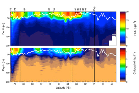 A section of chlorophyll and particulate organic carbon across the Weddell Gyre in the Southern Ocean calculated from the optical properties of fluorescence and beam attenuation respectively. Taken from Ceinwen Smith MSc Thesis.