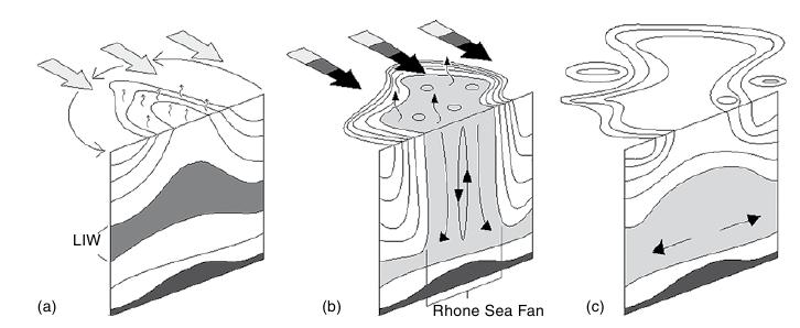 Schematic overview of convection phases: (a) isopycnal doming and erosion of stratification during pre-conditioning; (b) wind-driven surface heat loss deepens the mixed layer via plumes during violent mixing; c) baroclinic instability breaks up the mixed patch, homogenous  ater sinks and spreads, and surface  destratification completes the event (adapted from Marshall and Schott, 1999).